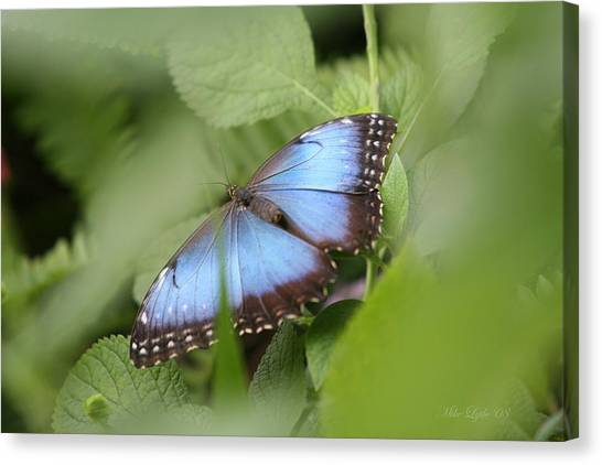 Blue Morpho Butterfly Canvas Print by Mike Lytle