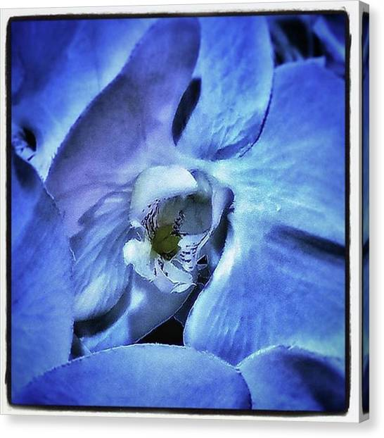 Blue Orchids. They Represent Strength Canvas Print by Mr Photojimsf