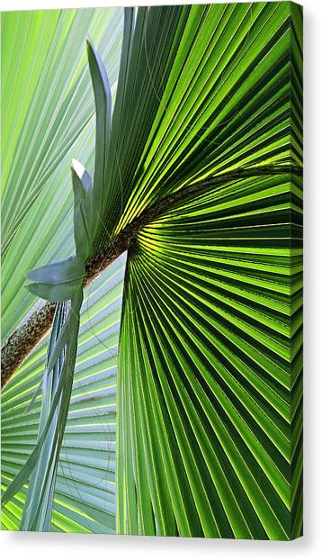 Blue Palma IIi Canvas Print by John Bartosik