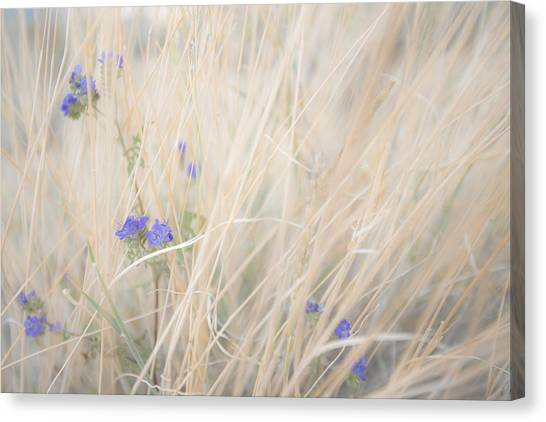 Blue Phacelia Canvas Print