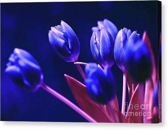 Blue Poetry Canvas Print