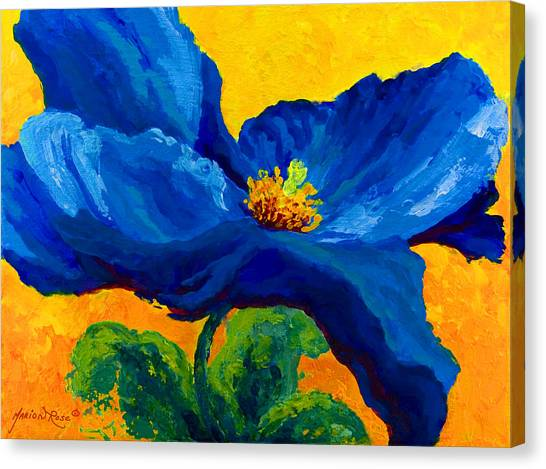 Vineyard Canvas Print - Blue Poppy by Marion Rose