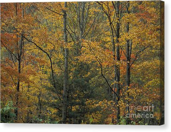 Blue Ridge Color Canvas Print by Stan and Anne Foster