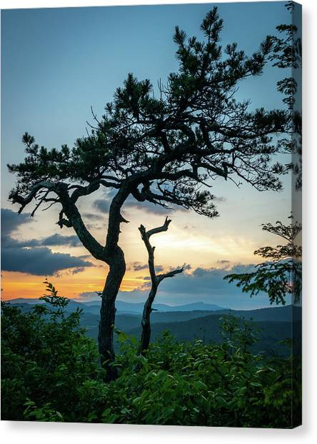 Blue Ridge Mountains Dr. Tree Canvas Print