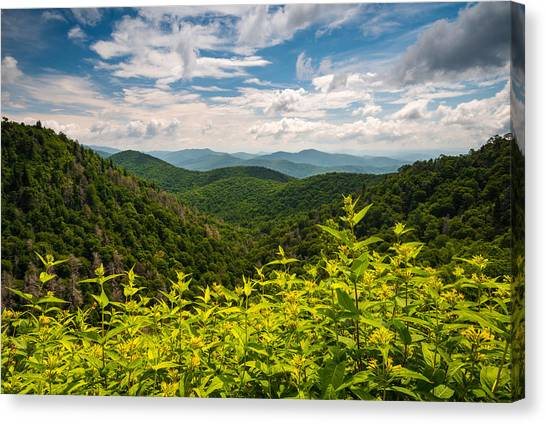 Blue Ridge Parkway Canvas Print - Blue Ridge Parkway Nc Summer Flowers by Dave Allen
