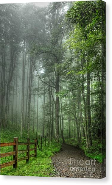 Blue Ridge - Trees In Fog Country Road I Canvas Print