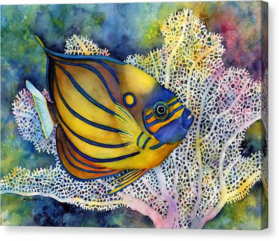 Blue Ring Angelfish Canvas Print