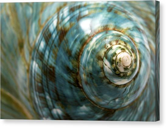 Blue Seashell Canvas Print