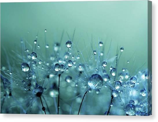 Blue Shower Canvas Print