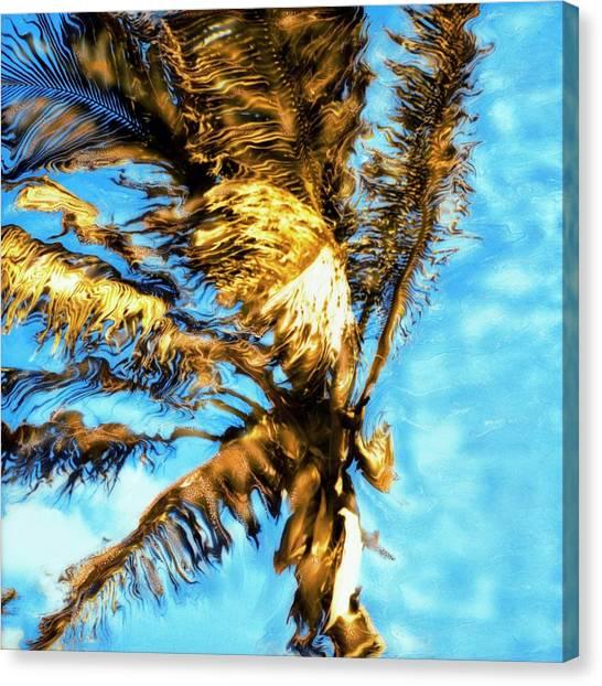 Blue Sky Palm Canvas Print by Paul Tokarski