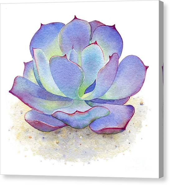 Cactus Canvas Print - Blue Sky Succulent by Laura Nikiel