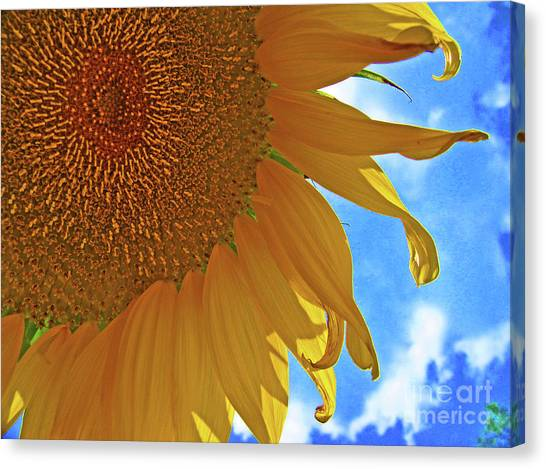 Blue Sky Sunflower Canvas Print