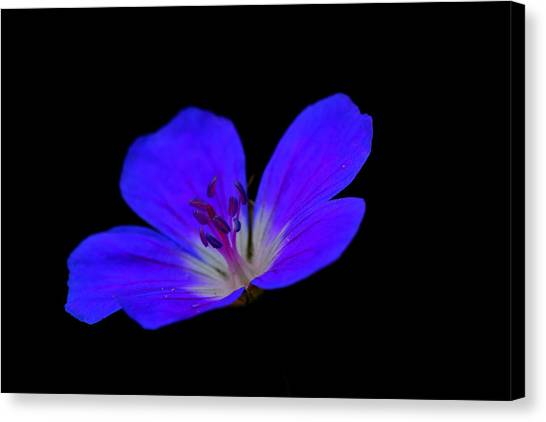Blue Stamen Canvas Print