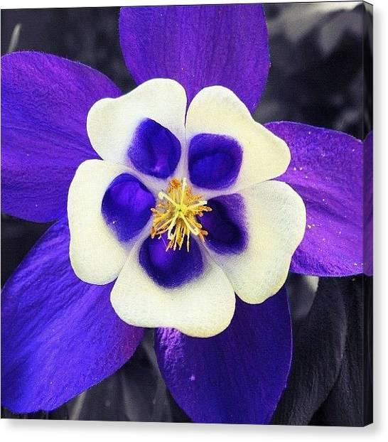 Berries Canvas Print - Blue Symmetry by Christine Cherry