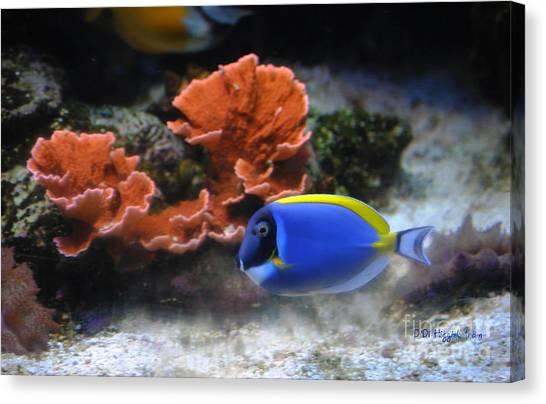 Blue Tang Fish And Coral Canvas Print