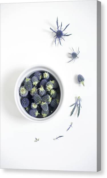 Blue Thistle Still Life Canvas Print