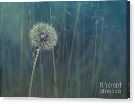 Dandelion Clocks Canvas Print - Blue Tinted by Priska Wettstein