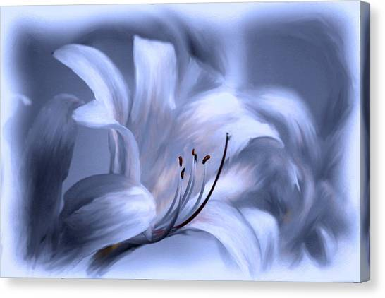 Blue Tinted Swirl Lily Canvas Print by Jim  Darnall