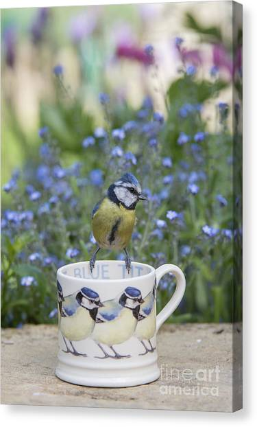 Titmice Canvas Print - Blue Tit Mug by Tim Gainey
