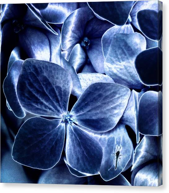 Blue Velvet Canvas Print