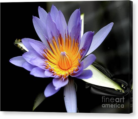 Blue Water Lily Pond Flower . 7d5726 Canvas Print by Wingsdomain Art and Photography