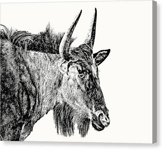 Blue Wildebeest Close-up Canvas Print