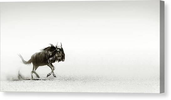 Open Canvas Print - Blue Wildebeest In Desert by Johan Swanepoel