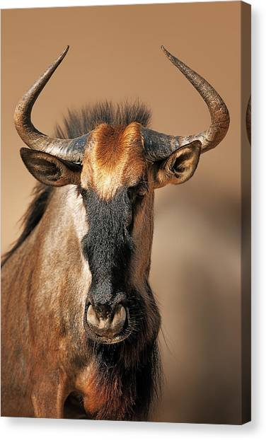 Close-up Canvas Print - Blue Wildebeest Portrait by Johan Swanepoel