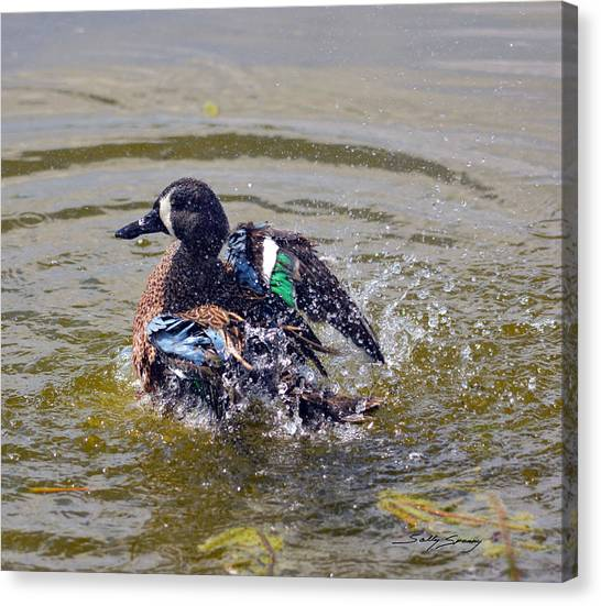 Blue Winged Teal 5 Canvas Print