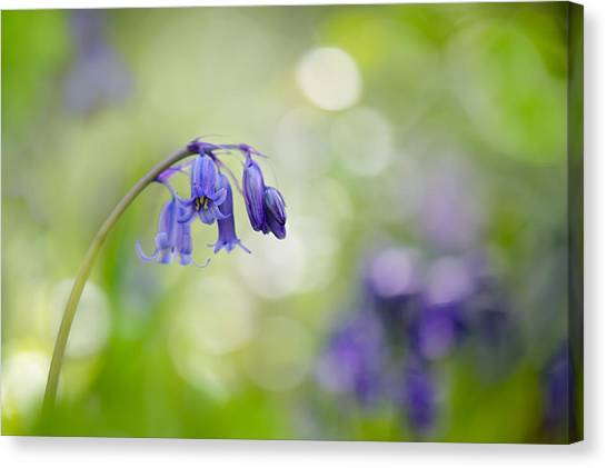 Bluebell Beauty Canvas Print