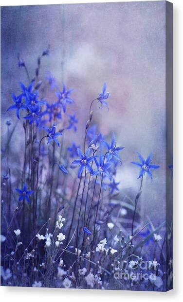 Yukon Canvas Print - Bluebell Heaven by Priska Wettstein