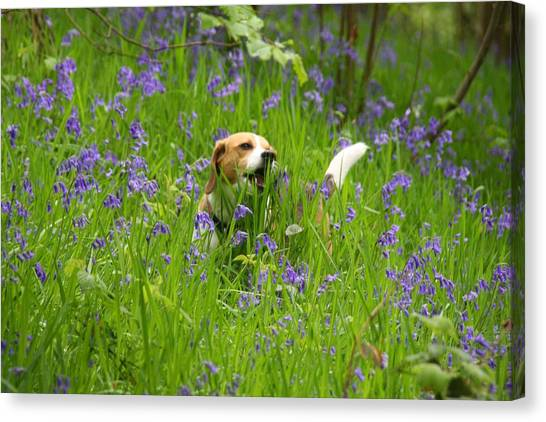 Bluebell Penny Canvas Print