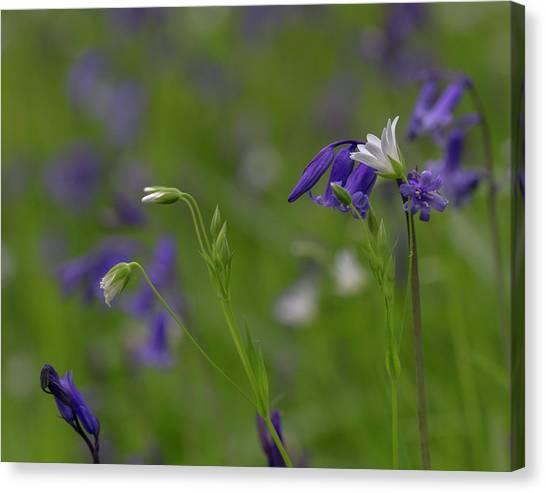 Bluebells And Stitchwort  Canvas Print