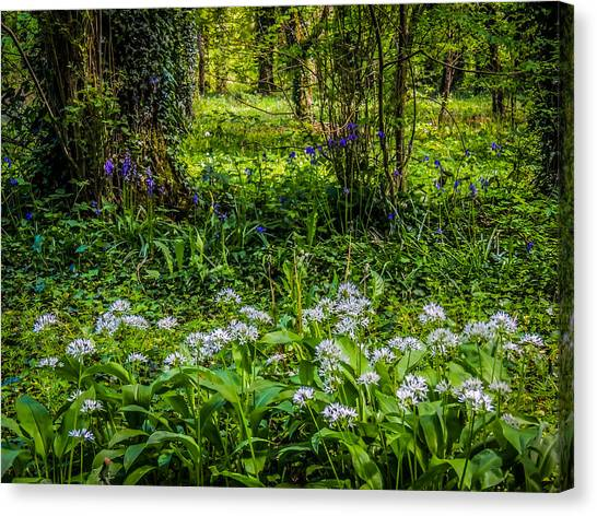 Bluebells And Wild Garlic At Coole Park Canvas Print