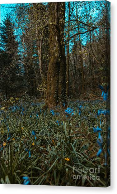 Bluebells In Lismore Forest 2 Canvas Print