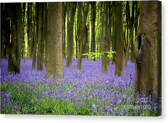 Forest Canvas Print - Bluebells by Jane Rix