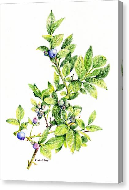 Blueberry Branch Canvas Print