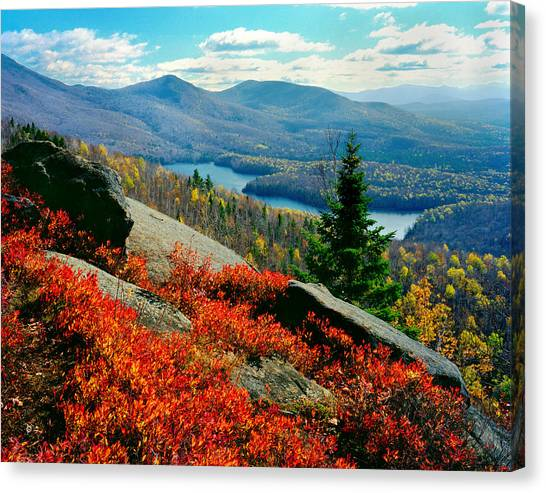 Blueberry Hill Canvas Print