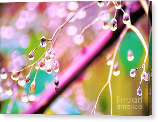 Blueberry Pearls Canvas Print