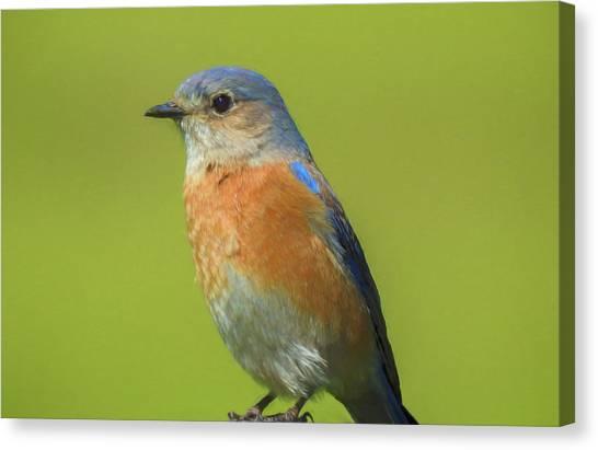 Bluebird Digital Art Canvas Print