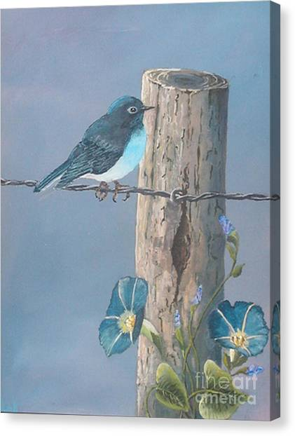 Bluebird Canvas Print by John Wise