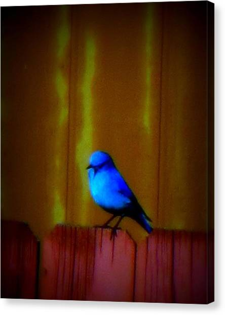Canvas Print featuring the photograph Bluebird Of Happiness by Karen Shackles