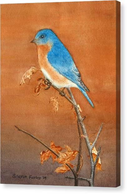 Bluebird Canvas Print by Sharon Farber
