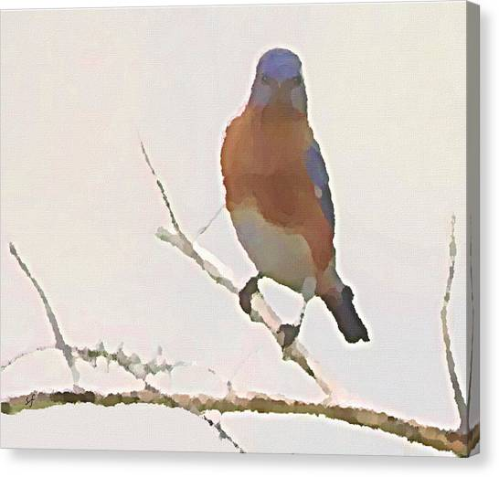 Bluebird Stare  Canvas Print