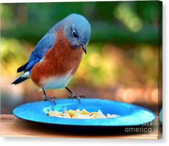 Bluebird's Dinner Canvas Print