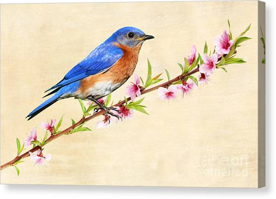 Bluebirds Canvas Print - Bluebird's Spring by Laura D Young