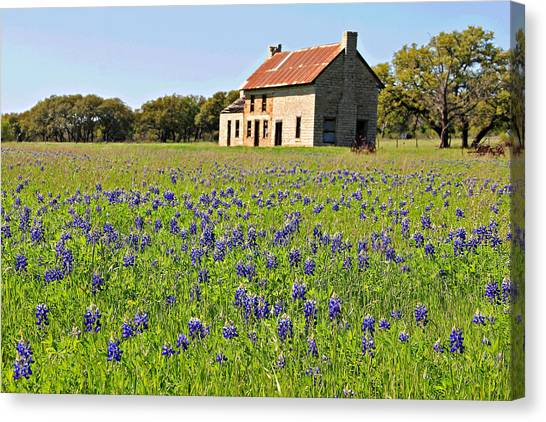 Bluebonnet Field Canvas Print