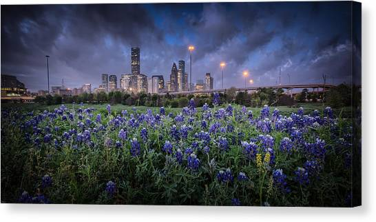 Bluebonnet Houston Canvas Print