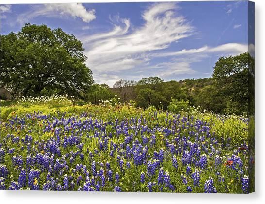 Bluebonnet Spring Canvas Print