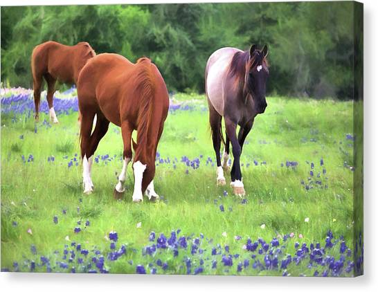 Bluebonnets And Horses Canvas Print by JC Findley